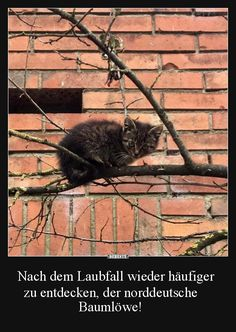 Nach dem Laubfall wieder häufiger zu entdecken.. | Lustige Bilder, Sprüche, Witze, echt lustig Funny Cats, Funny Animals, Cute Animals, Animals And Pets, Crazy Cat Lady, Crazy Cats, Maine Coon, Tumblr Funny, Funny Memes