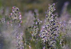 Herbs, Plants, Photography, Magick, Diet, Photograph, Fotografie, Herb, Photoshoot