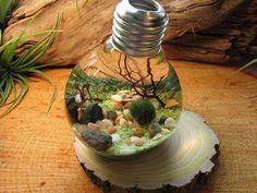 Terrarium Kit - Marimo Moss Ball Terrarium - Reclaimed Light Bulb with Living Japanese Moss Ball Aquarium Plant - Underwater Terrarium Mini Terrarium, Water Terrarium, Bottle Terrarium, Bottle Garden, Inventions Sympas, Marimo Moss Ball, Ideas Geniales, Cool Inventions, Light Bulb