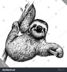Illustration about Black and white engrave isolated sloth vector art. Illustration of contour, ancient, engraving - 105991731 Animals Black And White, Black And White Drawing, Black And White Illustration, Black White, Animal Sketches, Animal Drawings, Drawing Sketches, Art Drawings, Drawing Animals