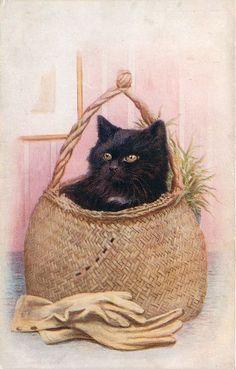 black cat in wicker basket, gloves in front