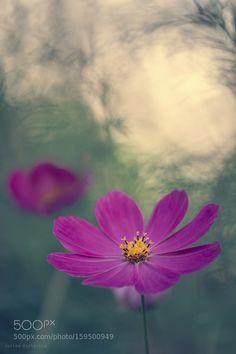 flower by kim1971. @go4fotos