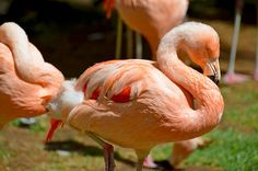 Flamingo garden at Flamingo Hotel & Casino in Las Vegas, Nevada. #hitpictures #lasvegas #flamingo #flamingohotel #birds