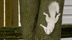 Image result for albino deer