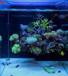 Historically saltwater aquarium owners have shied away from reefs. No one could understand why when these coral reefs were put into an aquarium the reef had a Saltwater Aquarium Setup, Coral Reef Aquarium, Saltwater Fish Tanks, Marine Aquarium, Aquarium Ideas, Live Aquarium, Coral Reefs, Marine Tank, Marine Fish
