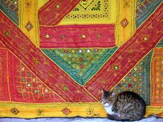 istanbul cat by loresima, via Flickr