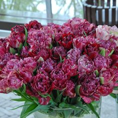 Dazzling Mosaic is a peony-flowered (Double Late) tulip, and when fully open its blooms easily reach 4 inches wide. The edges of each petal ...