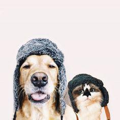 #animals #cuties