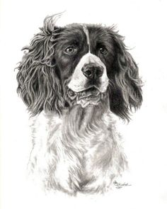 My hand drawn pet portraits ~ The Springer Spaniel