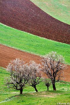 Spring flag by Kavan on Flickr