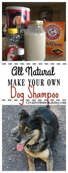 Easy all-natural homemade dog shampoo that will leave your pet clean and smelling fresh and only costs pennies to make. Homemade Dog Shampoo, Best Dog Shampoo, Natural Dog Shampoo, Dry Shampoo, Dog Training Classes, Training Tips, Stinky Dog, Itchy Dog, Dog Smells
