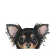 Chihuahua, Chihuahua Art, Black Chihuahua Gift, Chihuahua Lover (79 AUD) ❤ liked on Polyvore featuring home, home decor, wall art, black home decor, black wall art, framed paintings, black paintings and painted wall art
