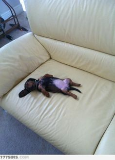 Look who's passed out on the couch :)