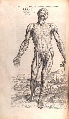 Jan van Calcar, from Vesalius' Fabrica