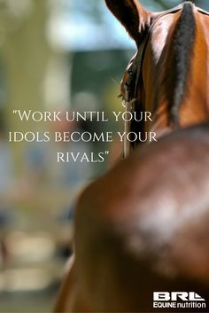 """Work until your idols become your rivals"" horse quote #BRLequine #barnrat #hardworkpaysoff #dressage"