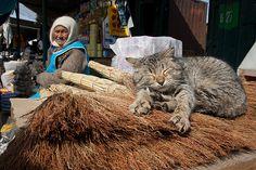 Broom Cat,  Atyrau, Kazakhstan (by berik)