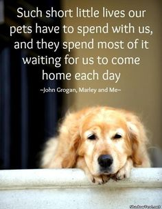 """""""Such short little lives our pets have to spend with us, and they spend most of it waiting for us to come home each day."""" --John Grogan, Marley and Me"""