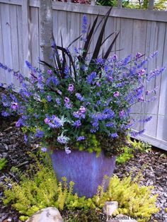 Beautiful pot & plant combination!