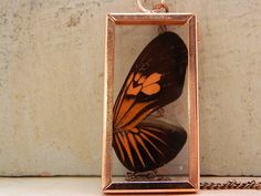 Your place to buy and sell all things handmade Taxidermy Jewelry, Neck Chain, Wing Necklace, Copper Color, Butterfly Wings, Style Me, Glass, Frame, Etsy