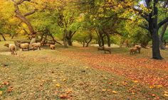 Scenic view of Hunza Nagar, Pakistan_12 نگر — فوٹو سید مہدی بخاری