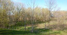 #trees behind a high school near my house. #grass