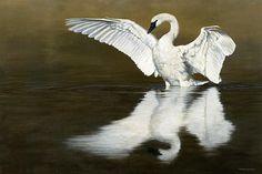 Swan Lake Print by P