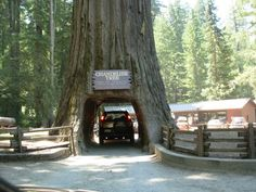 Tunnel Through Trees are Made so you can Travel without any Hurdle http://www.buzzodd.com/tunnel-through-trees/