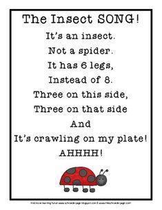 Insect Song - Monica Schroeder - TeachersPayTeachers.com