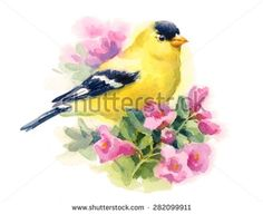 Watercolor Bird American Goldfinch Sitting on the Flower Branch Hand Painted Floral Greeting Card Illustration isolated on white background