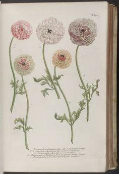vol. 4 - Phytanthoza iconographia, sive, Conspectus aliquot millium : - Biodiversity Heritage Library