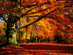 Photographic Print: Poster of Fine Art Photography by Philippe Sainte-Laudy : Tree Photography, Landscape Photography, Magic Forest, Autumn Forest, Tree Wall Art, Beach Landscape, Botanical Art, Belle Photo, Images