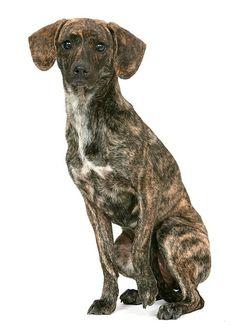 tennessee tree dog