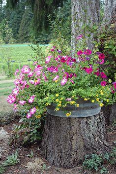 Tree stump & flowers