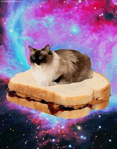 galaxies, cats, pb&j, floating in weird space: these are a few of my favorite things (click for gif)