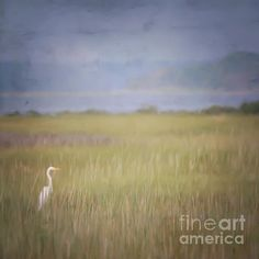 In The Marsh Photograph by Kerri Farley - In The Marsh Fine Art Prints and Posters for Sale fineartamerica.com