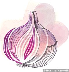 An illustration of garlic