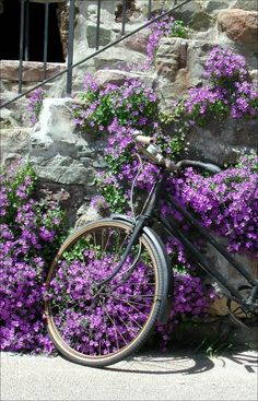 :)purple flowers and bike perfect combination in garden