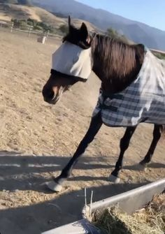 Davy Jones, Horse Racing, Foundation, Horses, Foundation Series, Horse
