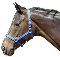 This economically priced halter is made of a double layer of heavy duty nylon and has chrome plated buckles. Equestrian, Westerns, Horses, Animals, Animales, Animaux, Horseback Riding, Animal, Animais