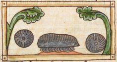 Animal detail from medieval illuminated manuscript, British Library Harley MS 3244, 1236-c 1250, f64r
