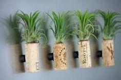 air plants in mason jars - Google Search