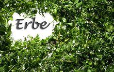 Cucinare con le erbe aromatiche: istruzioni per l'uso http://www.dissapore.com/grande-notizia/cucinare-con-le-erbe-aromatiche-istruzioni-per-luso/