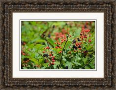 rd Erickson Framed Print featuring the photograph Blackberries In June 2016 at Rafter, Tennessee by rd Erickson