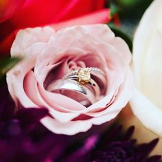 Gorgeous way to show off your wedding rings! Wedding Flowers, Wedding Rings, Showcase Design, Event Decor, Engagement Rings, Instagram Posts, Plants, Pink, Roses