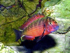 El maravilloso mundo submarino está parcialmente determinada por el lo que parece ser un sin fin de especies de peces. Con colores qu...