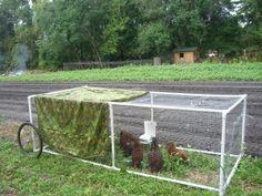 Simple pvc chicken tractor