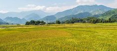 The rice harvest in Tu Le North Vietnam, Rice Terraces, Bus Tickets, Travel Route, Best Resorts, Hanoi, Small Towns, Harvest, Scenery