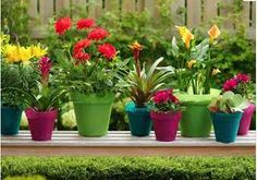 colourful garden - Google Search