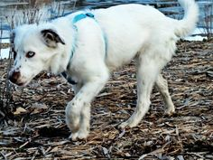 My dog in stock mode Goats, Dog, Animals, Animales, Animaux, Doggies, Goat, Dogs, Animal