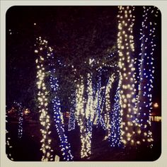 Christmas time in Knoxville...I like this picture!